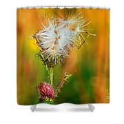 Thistle Seeds Shower Curtain