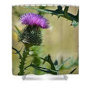 Thistle Spikes Shower Curtain