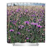 Thistle Storm  Shower Curtain