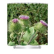 Thistle Trinity Shower Curtain