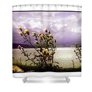 Thistledown Time Shower Curtain
