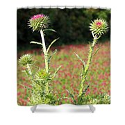 Thistles In A Field Of Clover Shower Curtain