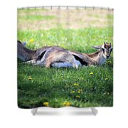 Thompson Gazelles Shower Curtain