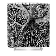 Thorn Tree Black And White Shower Curtain