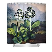 Thornton: Auriculas Shower Curtain