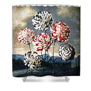 Thornton: Carnations Shower Curtain