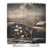 Thornton: Crocusi Shower Curtain
