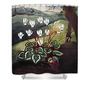 Thornton: Cyclamen Shower Curtain