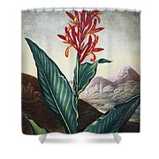 Thornton: Indian Reed Shower Curtain