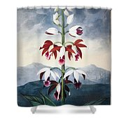 Thornton: Limodoron Shower Curtain