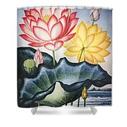 Thornton: Lotus Flower Shower Curtain