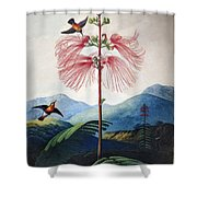 Thornton: Sensitive Plant Shower Curtain