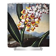 Thornton: Shell Ginger Shower Curtain