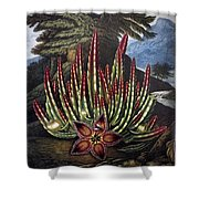 Thornton: Stapelia Shower Curtain
