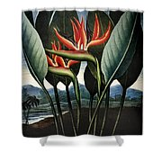 Thornton: Strelitzia Shower Curtain