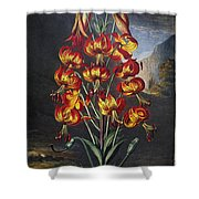 Thornton: Superb Lily Shower Curtain