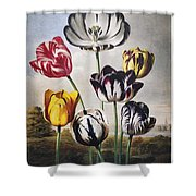 Thornton: Tulips Shower Curtain