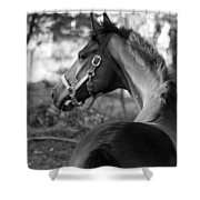 Thoroughbred - Black And White Shower Curtain