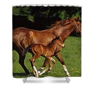 Thoroughbred Chestnut Mare & Foal Shower Curtain