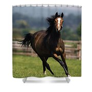 Thoroughbred Horses, Yearlings Shower Curtain by The Irish Image Collection