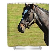 Thoroughbred Portrait Three Shower Curtain