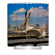 Those Jersey Gulls  Shower Curtain