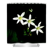 Those Little Flowers Shower Curtain