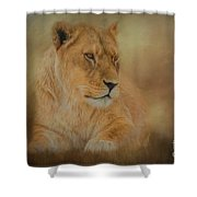 Thoughtful Lioness - Horizontal Shower Curtain