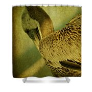 Thoughtful Pelican Shower Curtain
