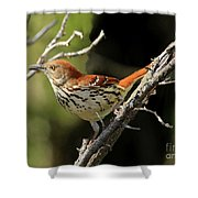 Thrasher At Large Shower Curtain