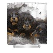 Three Adorable Black And Tan Dachshund Puppies Shower Curtain
