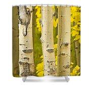 Three Autumn Aspens Shower Curtain