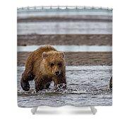 Three Bears Shower Curtain