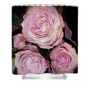 Three Beautiful Roses Shower Curtain