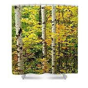 Three Birch Shower Curtain
