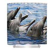 Three Bottlenose Dolphins Shower Curtain