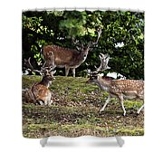 Three Bucks Shower Curtain