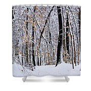 Three Creeks Conservation Area - Winter Shower Curtain