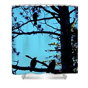 Three Crows In A Tree Shower Curtain