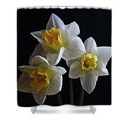 Three Daffodil Shower Curtain