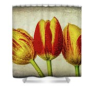 Three Dew Covered Tulips Shower Curtain