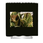 Three Different Differential Grasshoppers     July      Indiana Shower Curtain