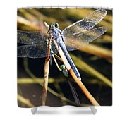 Three Dragonflies On One Reed Shower Curtain