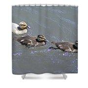 Three Duckies  Shower Curtain