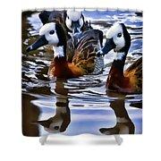 Three Ducks  Shower Curtain