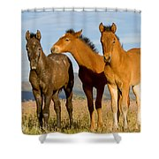 Three Foals Shower Curtain