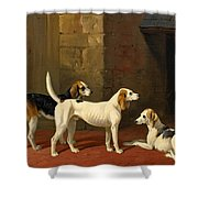 Three Fox Hounds In A Paved Kennel Yard Shower Curtain