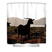 Three Goats Shower Curtain