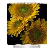Three Golden Sunflowers Shower Curtain