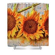 Three Graphic Sunflowers Shower Curtain